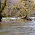 Drift Creek running high in January. - Horse Creek South Trail Hike