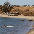 Dog owners enjoy Fiesta Island, an off-leash dog zone.- Mission Bay Park
