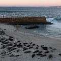 Harbor seals hauled out at the Children's Pool nearby.- Coast Boulevard Park