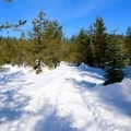 This popular route is frequently well packed.- Mountain View Shelter Snowshoe