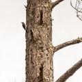 Woodpecker on the La Corona Trail.- La Corona Trail Hike