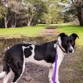 The La Corona Trail is a dog-friendly hike.- La Corona Trail Hike