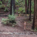 Multi-trail intersection.- Redwood Lower Loop Hike