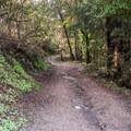 Hike through the Enchanted Trail at DeLaveaga Park.- Enchanted Trail Hike