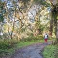 A jogger enjoying the Enchanted Trail.- Enchanted Trail Hike