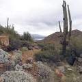 Views of the Sonoran Desert landscape around the national monument.- Tonto National Monument, Upper + Lower Ruins