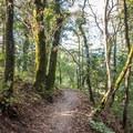 Hiking Upper DeLaveaga Loop.- Upper DeLaveaga Loop Hike