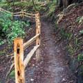 Hiking the Upper DeLaveaga Loop.- Upper DeLaveaga Loop Hike