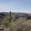 Saguaro (Carnegiea gigantea) are abundant along the trail.- Black Cross Butte Hike