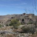 Ocotillo (Fouquieria splendens) on Black Cross Butte.- Black Cross Butte Hike