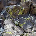 Lichen growing on the basalt produced from the volcanic flow-capped mesa.- Fortification Hill Hike
