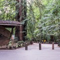 Trail entry and visitor center.- Redwood Grove Loop Hike
