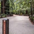 Redwood Grove Loop Trailhead.- Redwood Grove Loop Hike