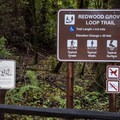 Redwood Grove Loop trail information sign.- Redwood Grove Loop Hike
