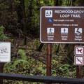 Redwood Grove Loop trail information sign.- Redwood Grove Loop Hike