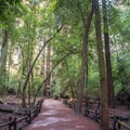 Redwood Grove Loop Trail.- Redwood Grove Loop Hike