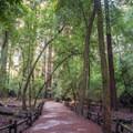 Redwood Grove Loop Trail.- Redwood Grove Loop Hike