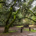 Campsite at Henry Cowell Campground.- Henry Cowell Redwoods State Park Campground