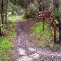 The junction with Pine Trail. - Graham Hill Trail