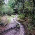 Graham Hill Trail in Henry Cowell Redwoods State Park.- Graham Hill Trail