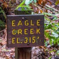 Eagle Creek at Henry Cowell State Park.- River Trail Hike