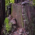 Redwood stump on the River Trail.- River Trail Hike