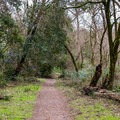 Hiking the Meadow Trail in Henry Cowell Redwoods State Park.- Meadow Trail Hike