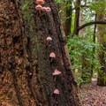 Unidentified species (help us identify it by providing feedback).- Meadow Trail Hike