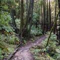 Hiking the Eagle Creek Trail.- Eagle Creek Trail Hike