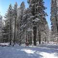 The trail loop can start behind either gate.- Donner Memorial State Park Cross-Country Ski