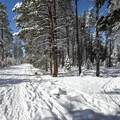 There are endless opportunities to leave the trail and head into the backcountry.- Donner Memorial State Park Cross-Country Ski