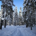 The trail threads through the forest.- Donner Memorial State Park Cross-Country Ski