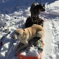 A homemade pulk sled can help to transport items and give dogs a break from standing in the snow.- White River Hut Cross-Country Ski