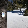 The Donner Lake Rim Trail markers will help keep you on the right trail, but don't rely on them.- Donner Ridge Snowshoe via Johnson Canyon