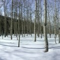 Aspen groves mid-way to the upper falls.- Upper Fish Creek Falls