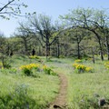 Memaloose Hills trail- Memaloose Hills Trail
