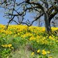 Memaloose Hills.- Memaloose Hills Trail