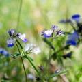 Unidentified species (help us identify it by providing feedback).- Memaloose Hills Trail