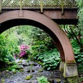 Walking bridge in Crystal Springs Rhododendron Gardens.- Crystal Springs Rhododendron Garden