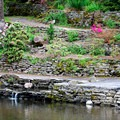 Water feature in Crystal Springs Rhododendron Gardens.- Crystal Springs Rhododendron Garden