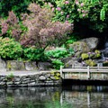 Small waterfall in Crystal Springs Rhododendron Gardens.- Crystal Springs Rhododendron Garden