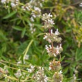 Unidentified species (help us identify it by providing feedback).- Borrego Canyon + Red Rock Canyon Trails