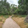 Hiking the Borrego Canyon Trail in Whiting Ranch Wilderness Park. - Borrego Canyon + Red Rock Canyon Trails