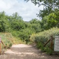 The start of the Borrego Canyon Trail in Whiting Ranch Wilderness Park.- Borrego Canyon + Red Rock Canyon Trails