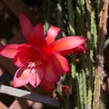 Unidentified species (help us identify it by providing feedback).- Los Angeles County Arboretum + Botanic Garden