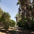Australian garden.- Los Angeles County Arboretum + Botanic Garden