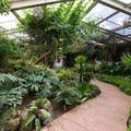 Tropical greenhouse.- Los Angeles County Arboretum + Botanic Garden