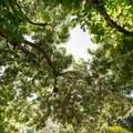 Under a fringe tree.- Los Angeles County Arboretum + Botanic Garden