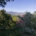 View from Tallac Knoll. - Los Angeles County Arboretum + Botanic Garden