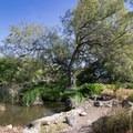 Meadowbrook area.- Los Angeles County Arboretum + Botanic Garden